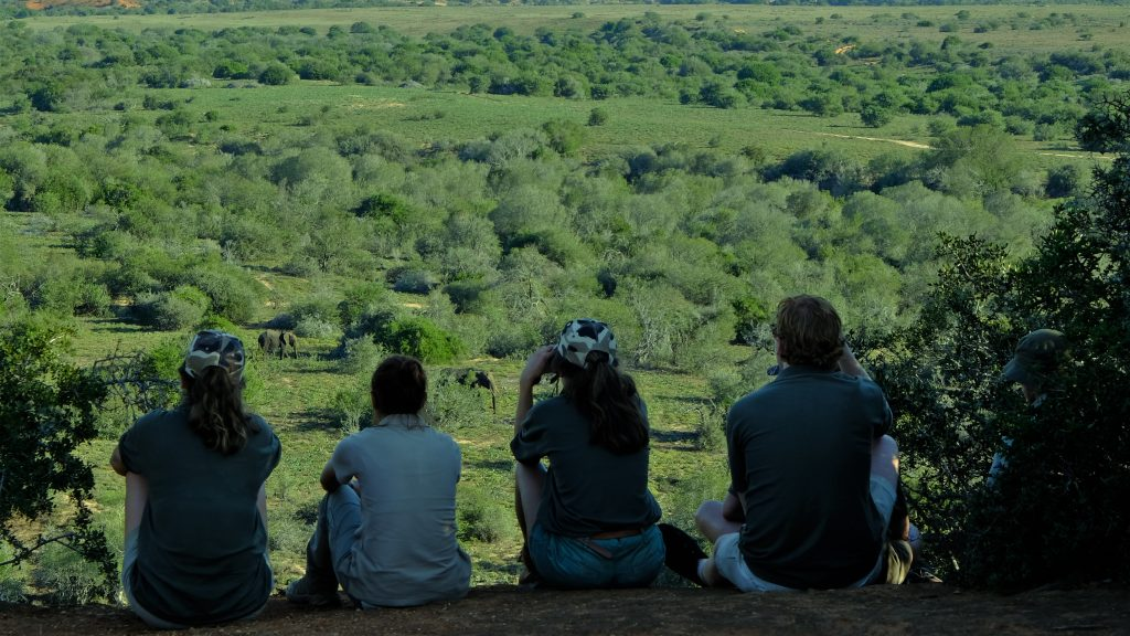 Elephant sighting on lookout sitting in a row